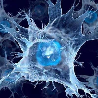 树突状细胞储存